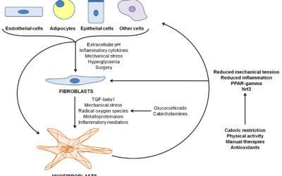 La relazione tra sistema immunitario e fascia nel paziente cronico
