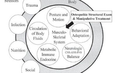 Quali principi dobbiamo utilizzare nel trattamento osteopatico delle malocclusioni e dei Disordini Temporo-Mandibolari?